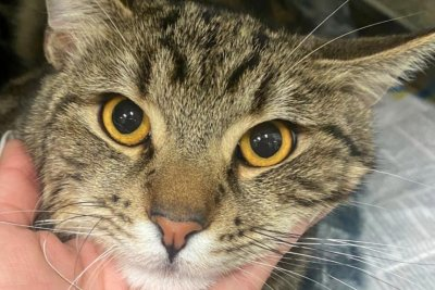 Watch:-Missing-cat-lived-in-storm-drain-for-nearly-two-months