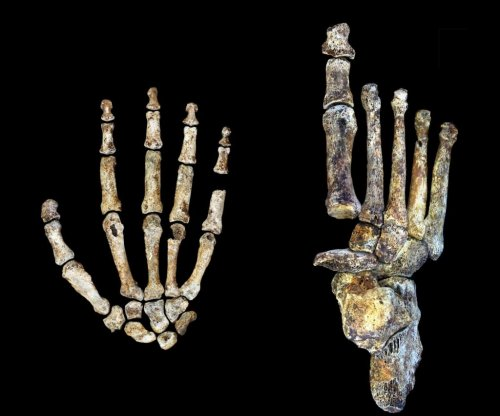 Foot of new human ancestor, Homo naledi, resembles our own