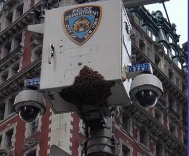 Nearly 20,000 bees swarm New York City surveillance camera