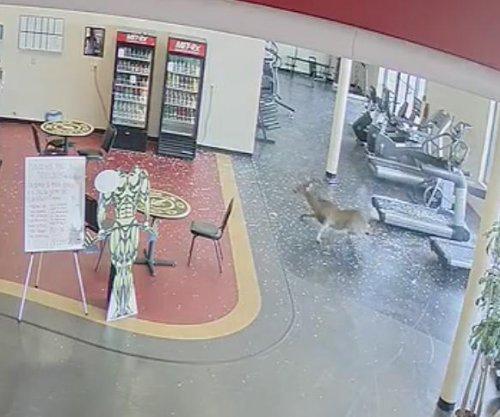 Deer bursts through window of South Carolina Gold's Gym