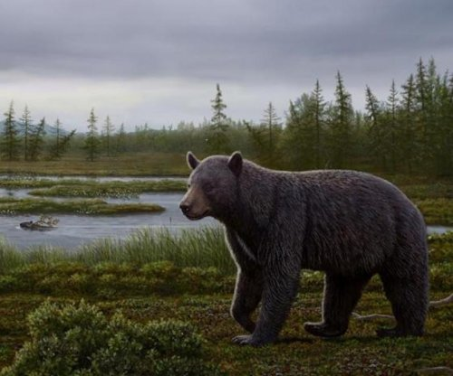 Fossil shows ancient bear had a sweet tooth