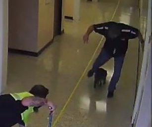 Raccoon leads faculty members on chase through Texas school