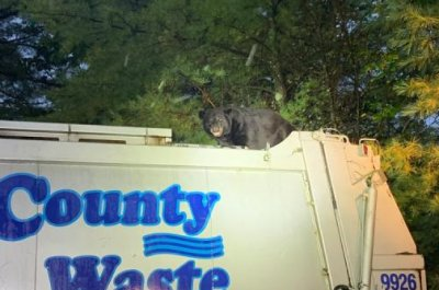 Bear rides on top of garbage truck in Pennsylvania