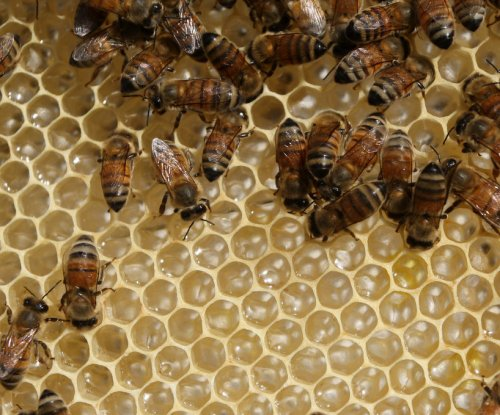 Lefties and righties: Flights of honeybees reveal individual directional tendencies