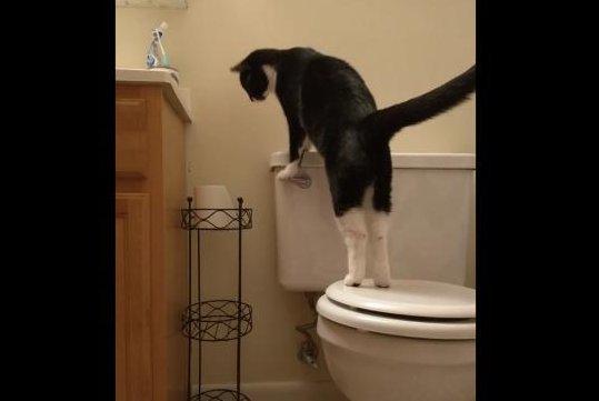 Cat Flushing a Toilet Lyrics & Tabs by Parry Gripp