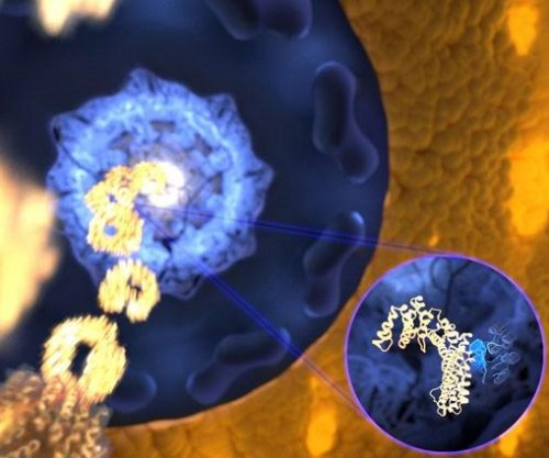 Cell proteins are floppy but fast