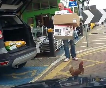 Chicken shocks shopper by jumping out of SUV