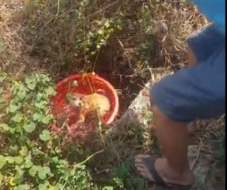 Dog rescued from deep pit after three days