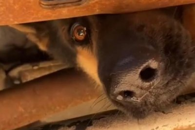 Texas emergency responders free dog trapped in truck's undercarriage
