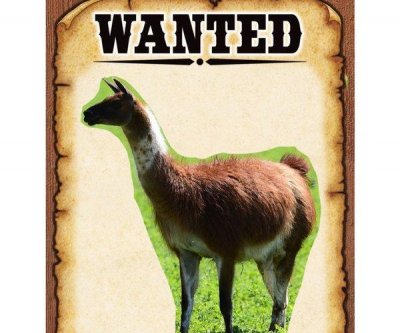 Colorado sheriff's office chronicles epic saga of llama on the loose