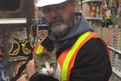 Cat rescued from tracks at New York subway station