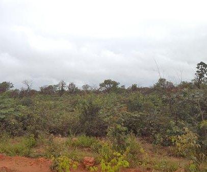 Demand for meat driving deforestation in Brazil