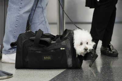 United Airlines partners with American Humane, resumes pet reservations