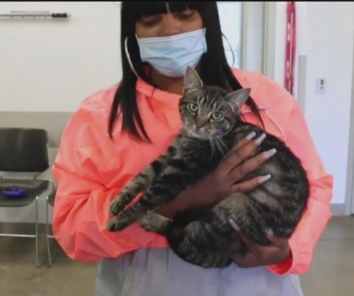 Cat reunited with Pittsburgh family 5 months after house fire