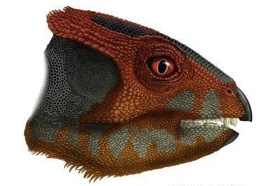 Paleontologists discover new hornless 'horned dinosaur' species