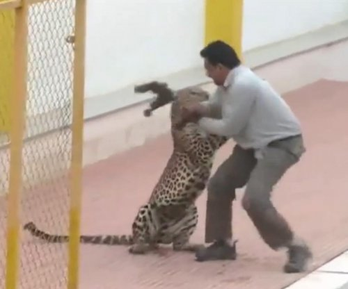 Leopard enters school in India, attacks six