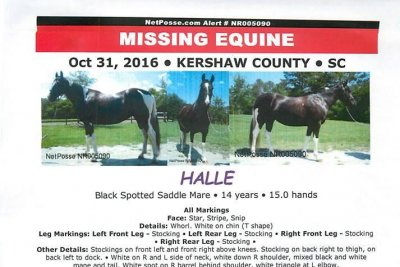 Horse stolen from temporary shelter in South Carolina found