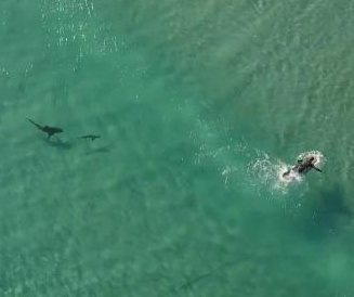 Drone pilot shocked by sharks swimming around Florida surfers