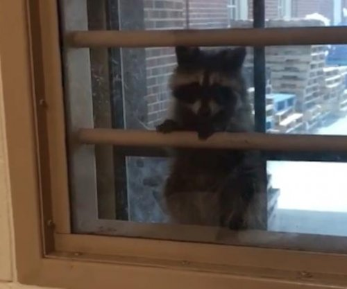 'Masked bandit' raccoon breaks into Virginia correctional facility