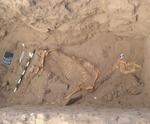Ancient horse burial offers evidence of regime change in Nile River Valley