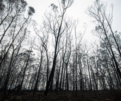 Sydney, New South Wales under 'severe' fire danger alert