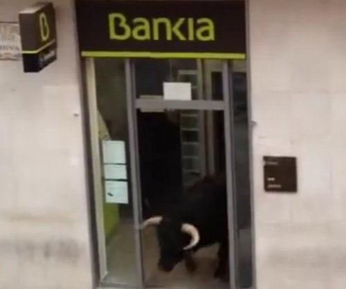 Hidden charges: Bull vanishes into bank during Spanish festival