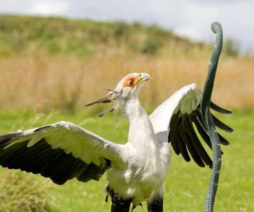 Researchers analyze precision of secretary bird's deadly kick