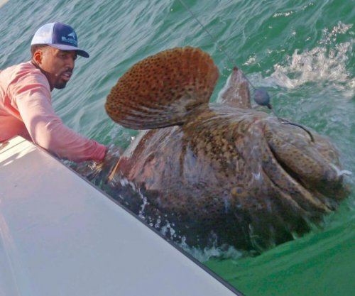 Watch: Wilson Chandler hooks 350-pound goliath grouper