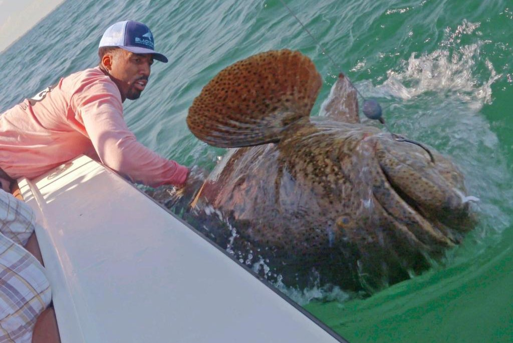 Watch: Wilson Chandler hooks 350-pound goliath grouper - UPI.com