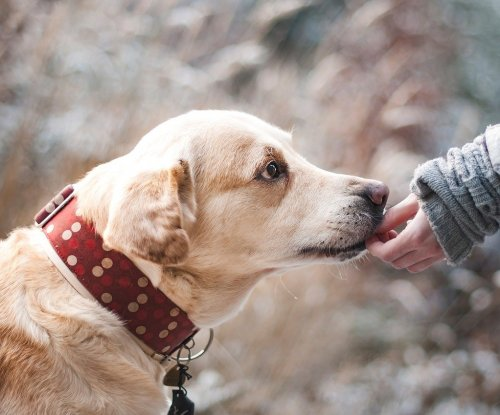 More detailed dog reference genome to aid studies of heritable diseases
