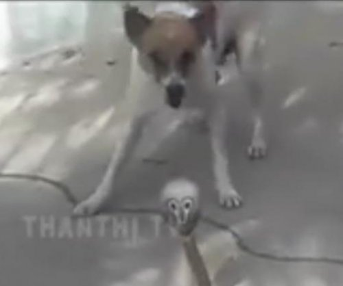Small dogs claim victory over cobra on owner's property