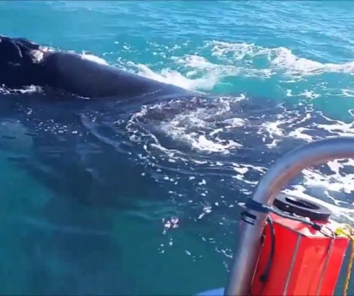 Southern right whale visits fisherman off Africa's southern tip