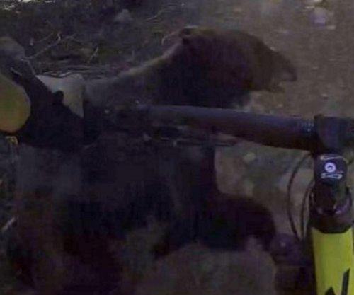 Mountain biker's camera captures trail crash with bear