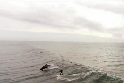 Surfer joined by pod of playful dolphins in California