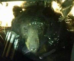 Deputies release 'hangry' bear from Colorado car
