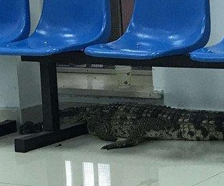 Police capture crocodile in public park after restaurant escape