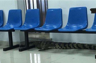 Police capture crocodile in public park after restaurant escape