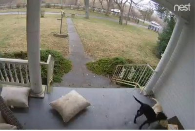 Kentucky woman discovers porch thieves were her own dogs
