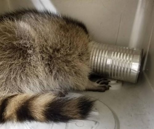 Raccoon rescued from aluminum can in Wisconsin