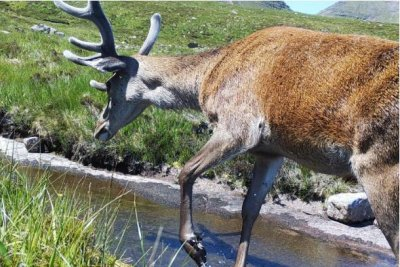Researchers detect wildlife using DNA found in river water