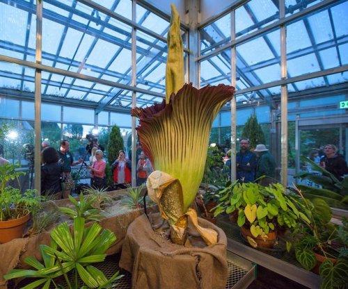 Corpse flower draws record crowds to Denver Botanic Gardens