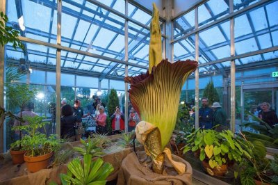 Thousands Line Up To See Denveru0027s Stinky Corpse Flower   UPI.com