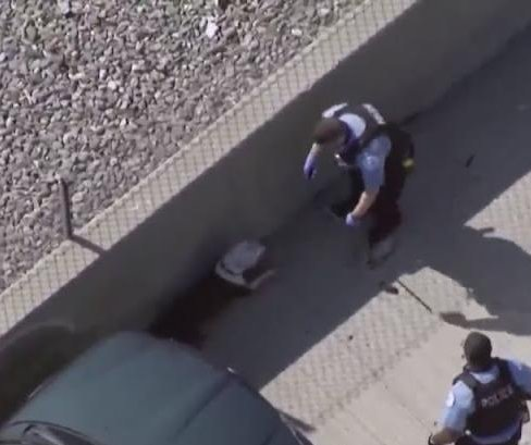 Loose dog rescued from I-94 in Chicago