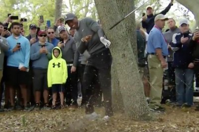 Valspar Championship: Tiger Woods hits crazy tree shot, literally breaks internet