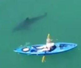 Drone video captures kayaker's great white shark encounter