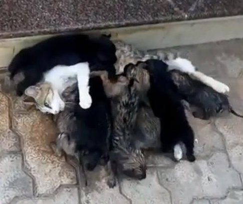 Neglected puppies nursed by mother's feline nemesis