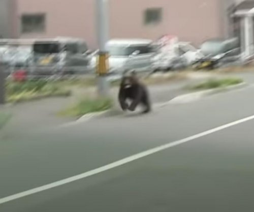 Bear shot dead after four people reported injured in Japan
