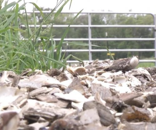 Road made from unwashed clam shells stinks up neighborhood
