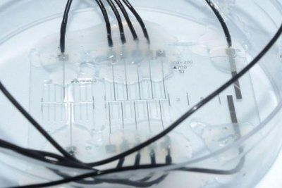 Nerve on a chip may improve prosthetic design
