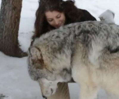 Wolf shows some love to Colorado sanctuary worker